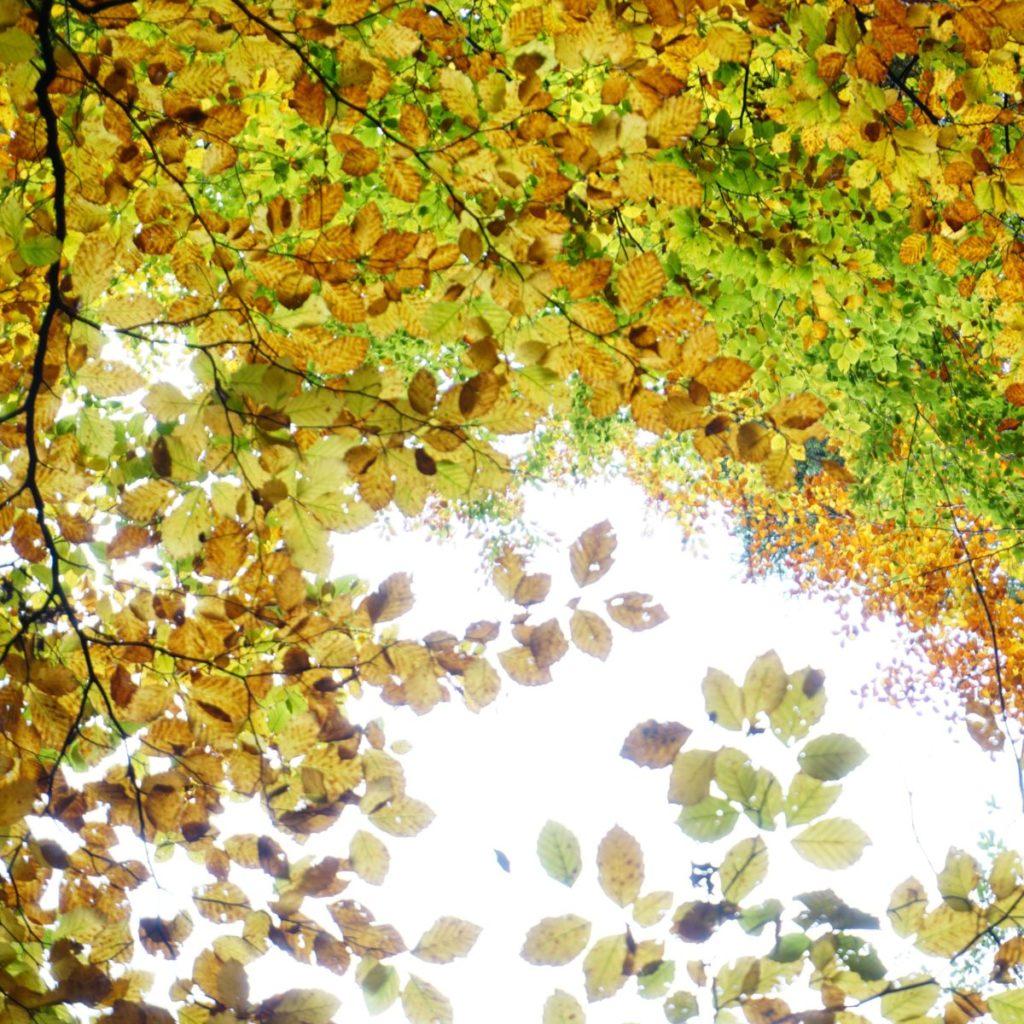 inspiration-nature-feuilles-d-automne